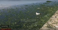"""Vlore """"Lungomare"""" EU Projekt, eine stinkende Abwasser Brühe"""